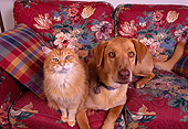 DOK 03 RK0121 21