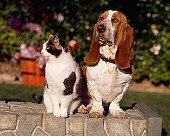 DOK 03 RK0185 18