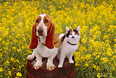 DOK 03 RK0187 04