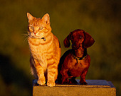 DOK 03 RK0190 06