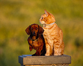 DOK 03 RK0190 25