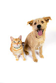 DOK 03 RK0217 03