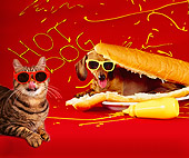 DOK 03 RK0254 01