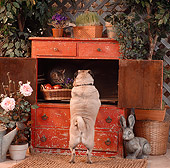 DOK 03 RS0015 01