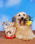 DOK 04 RK0002 08