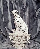 DOK 04 RK0137 22
