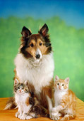DOK 04 RC0002 01
