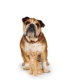 DOK 04 RK0010 02