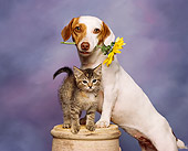 DOK 04 RK0036 02