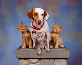 DOK 04 RK0037 03