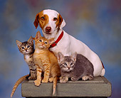 DOK 04 RK0037 04