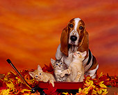 DOK 04 RK0051 04