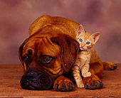 DOK 04 RK0071 13