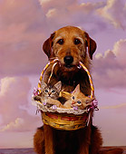 DOK 04 RK0080 04
