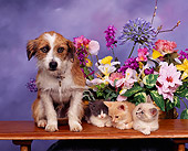 DOK 04 RK0107 01