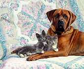 DOK 04 RK0123 03