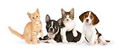 DOK 05 RK0012 01