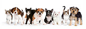 DOK 05 RK0018 01