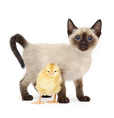 DOK 05 XA0007 01