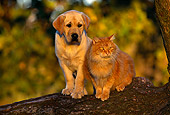 DOK 06 RK0003 02