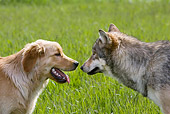 DOK 07 KH0001 01