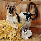 DOK 07 RS0008 02