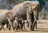 ELE 01 GL0001 01