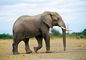 ELE 01 GL0002 01