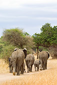 ELE 01 JM0003 01