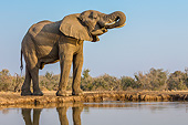 ELE 01 KH0009 01