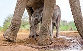 ELE 01 KH0016 01