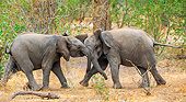ELE 01 KH0017 01