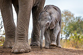 ELE 01 KH0019 01