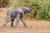 ELE 01 KH0020 01