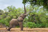 ELE 01 KH0028 01