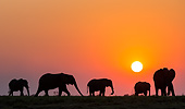 ELE 01 KH0037 01