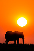 ELE 01 KH0039 01