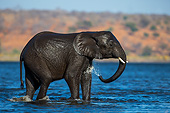 ELE 01 KH0049 01