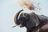ELE 01 KH0052 01