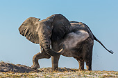 ELE 01 KH0058 01