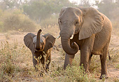 ELE 01 KH0069 01