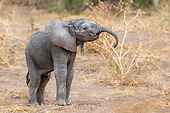 ELE 01 KH0072 01
