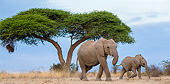 ELE 01 KH0078 01