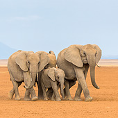 ELE 01 KH0079 01