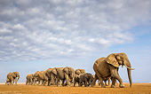 ELE 01 KH0087 01