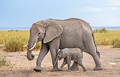 ELE 01 KH0097 01