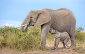 ELE 01 KH0099 01