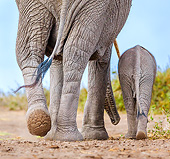ELE 01 KH0100 01