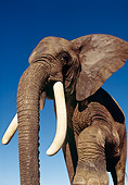 ELE 01 RK0014 04
