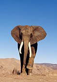 ELE 01 RK0017 09